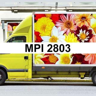 Immagine di Vinile AVERY MPI 2803 BIANCO GLOSS PERM GRIGIO. 80 MY 105X50